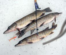 стабилизатор клева fishhungry